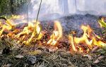 Как разжечь костер: виды костров и их предназначение, правила разведения
