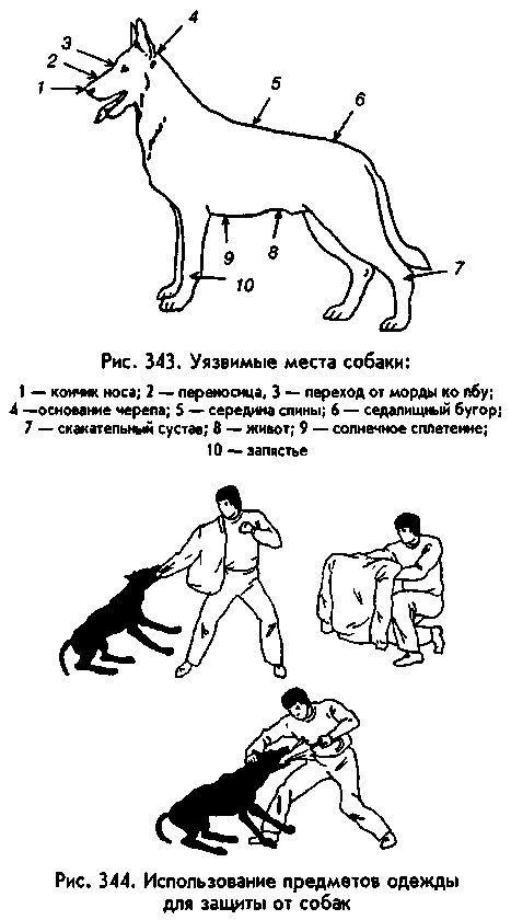 точки на теле собаки