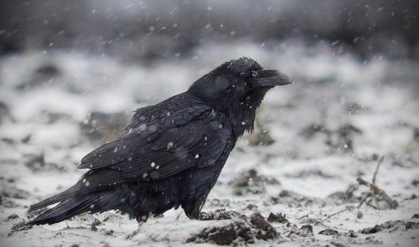 Птицы Москвы и Подмосковья фото с названиями: зимующие, лесные, хищные, скачать определитель